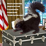 Skunk on a trunk lies